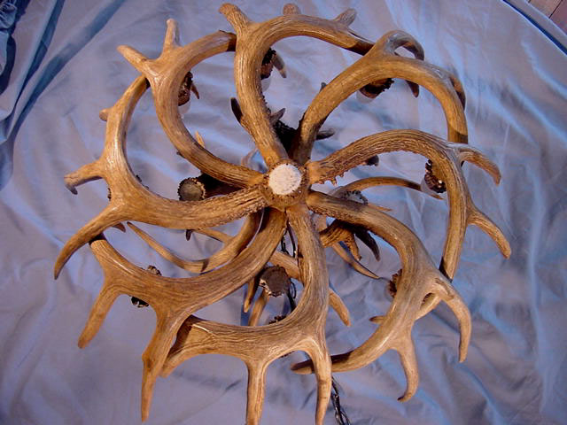 Real antler whitetail deer chandelier 8 lights trophy size antlers white tail chandelier bottom look aloadofball Gallery