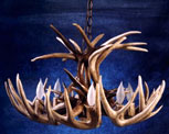 White Tail Deer Antler Chandeliers