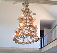 Real Antler Fallow Four Tier Chandelier