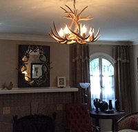 White-tail Real Antler Chandelier Special SP-2