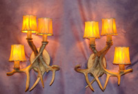 Real Antler 3 Light White Tail Deer Sconce