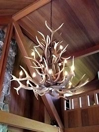 Medium Elk  Cascading Chandelier