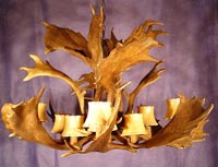 Royal Crown Fallow Deer Antler Chandelier