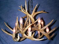Antlers Chandelier (White Tail)