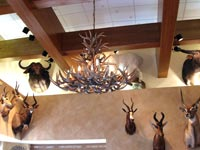 XX-Large Royal Crown Oval White Tail Deer Chandelier